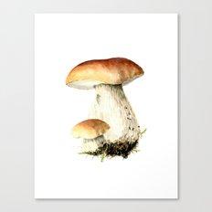 Bolet Canvas Print