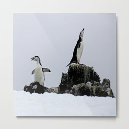 Chinstrap Penguins Metal Print