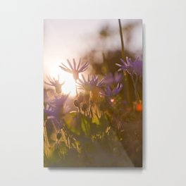 Sunset in the wilderness Metal Print