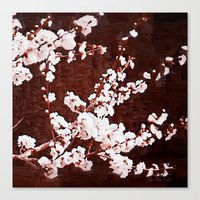 cherry blossoms Canvas Prints featuring Cherry Blossoms by Paula Belle Flores
