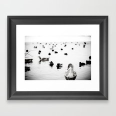 Swan Lake Framed Art Print