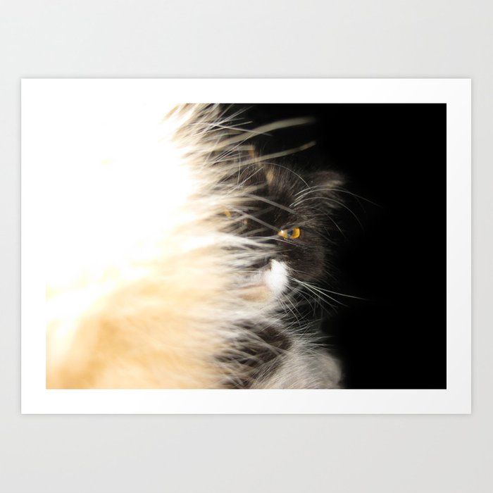 Fluffy Calico Cat Art Print