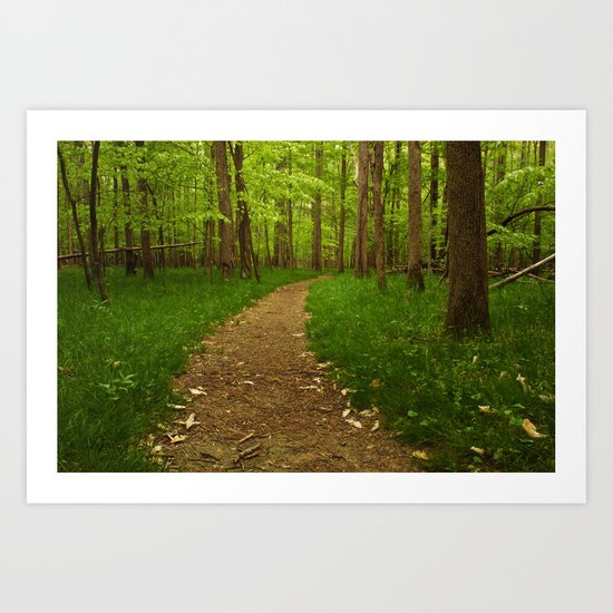 Walk in the Woods II Art Print