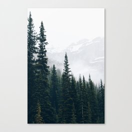 Evergreens in the fog Canvas Print