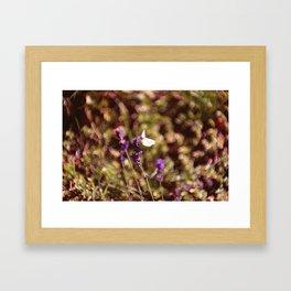 lavendel sommer Framed Art Print