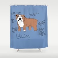 english bulldog Shower Curtains featuring Bulldog by Lindsay Beth