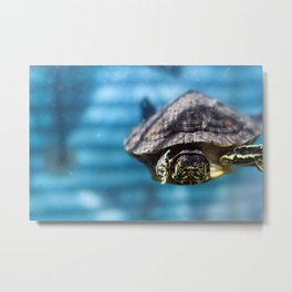 Mr. Chompers the Turtle Metal Print