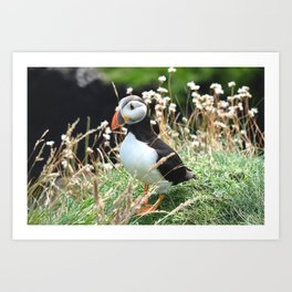Puffin Therapy Art Print