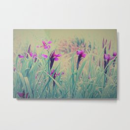 Iris Field in Pastell Dream Colors Metal Print