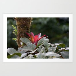 Wild Orchid Flower in Costa Rica Art Print