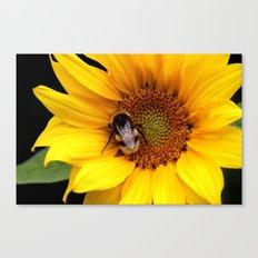 Sunflower Part I.  Canvas Print