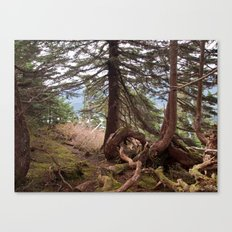 The roots Canvas Print
