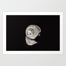 Broken Sea Shell Art Print