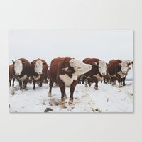 cows Canvas Prints featuring Cows  by Haley Lauren