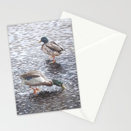 two mallard ducks standing in water Stationery Cards