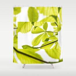 Aesculus horse chestnut foliage Shower Curtain