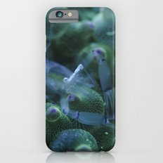 Anemone Shrimp on Bubble Tip Anemone iPhone 6s Slim Case