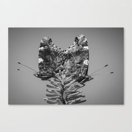 Red Admiral Butterflies Mating Canvas Print