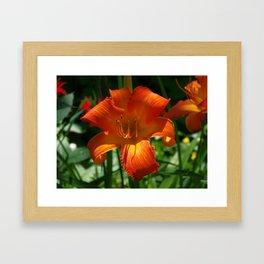Fiery Daylily Flower - Hemerocallis 'Coleman Hawkins' Framed Art Print
