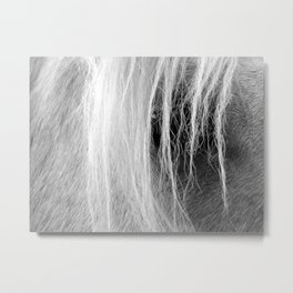 Palomino in Black and White Metal Print