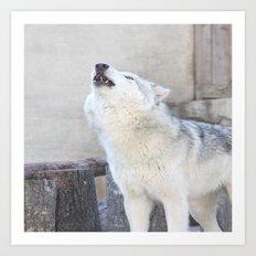 Howling Wolf 3 Art Print