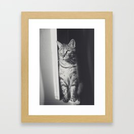 Sunlight black & white cat Framed Art Print