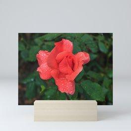 A rose after the rain Mini Art Print