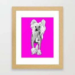 Sassy Chinese Crested Framed Art Print