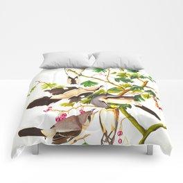 Great Cinereous Shrike, or Butcher Bird Comforters