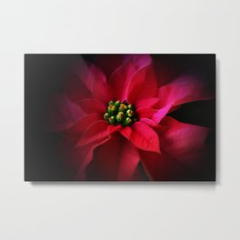 A Poinsettia Portrait Metal Print
