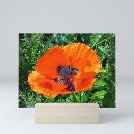 Wild Red Poppy Photograph Mini Art Print