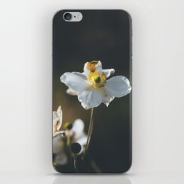 Anemone flowers iPhone Skin