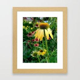 Coneflower Garden Framed Art Print