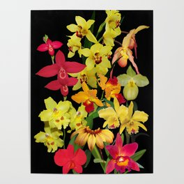 Orchids - Hot Colors! Poster