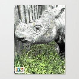 Sumatran Rhinoceros Canvas Print