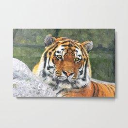 Water color digital illustration of Amur Tiger Metal Print