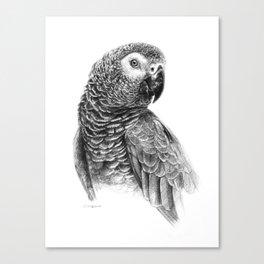 Gray Parot G083 Canvas Print