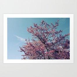 Blossom Into Spring Art Print