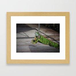 Cayman Iguana II Framed Art Print