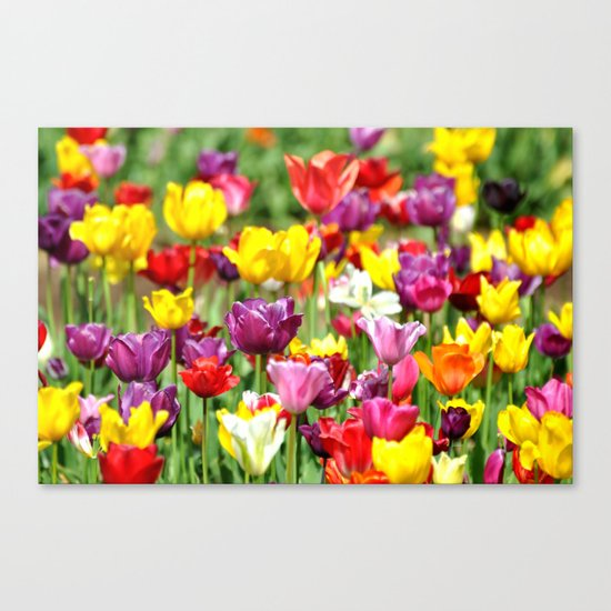 PRETTY TULIPS Canvas Print
