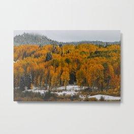 Aspen Autumn Metal Print