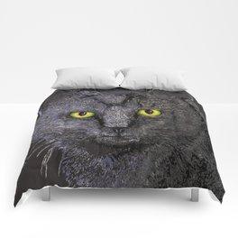 Gray Tabby Comforters