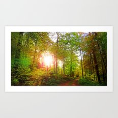 MM - Evening sun in the fall forest Art Print