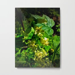 Wild Black Currant Flowers Metal Print