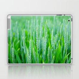 Green Wheat Field in Summer Laptop & iPad Skin