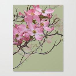 PINK FLOWERING DOGWOOD Canvas Print