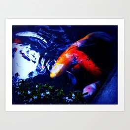 Koi Fish play coy Art Print