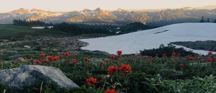 Wildflowers at Mt. Rainier Coffee Mug