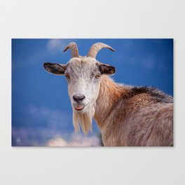 Goat - tongue out 8078 Canvas Print