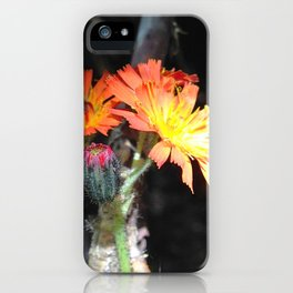Watercolor Flower, Orange Hawkweed 02, Boulder, Colorado, Group Therapy iPhone Case